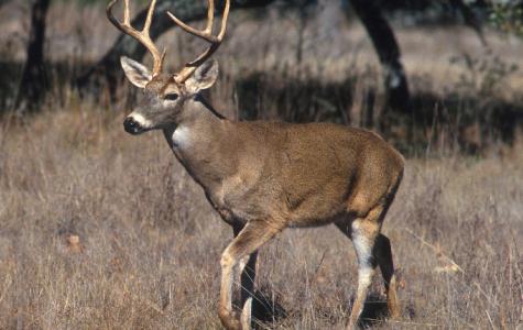 Deep Woods with Thomas Moore: 2016 Deer Season Forecast