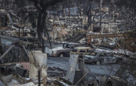 Terror Runs Ablaze: The West Coast Wildfires