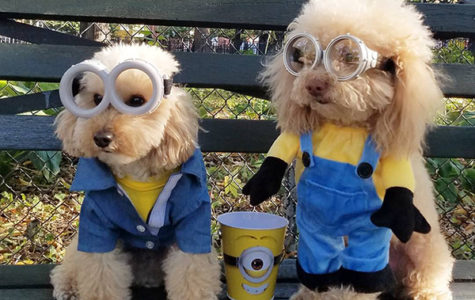 Top Ten Halloween Costumes: for the pups
